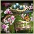 Spring Zen Free